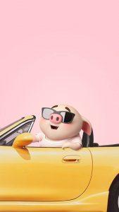 Những chú heo đáng yêu biểu cảm cực cool cute pho mai que, ngộ nghĩnh, dẽ thương, pig cute 2019 heo lợn ỉnNhững chú heo đáng yêu biểu cảm cực cool cute pho mai que, ngộ nghĩnh, dẽ thương, pig cute 2019 heo lợn ỉn